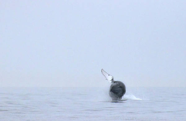 Wall Art - Photograph - Whale by Charles Harden
