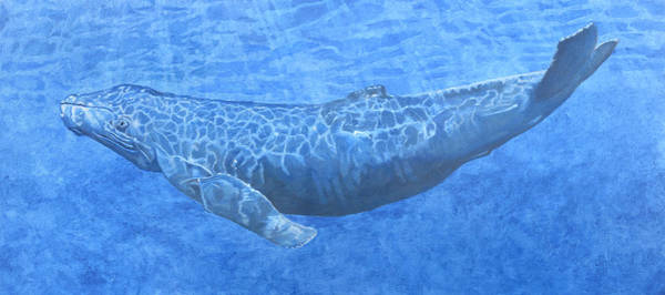 Drawing - Whale In Surface Light by Dominic White