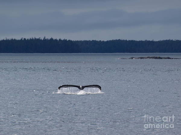 Photograph - Whale Of A Tail by Vivian Martin