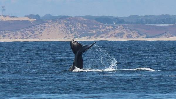 Photograph - Whale Tail  by Christy Pooschke