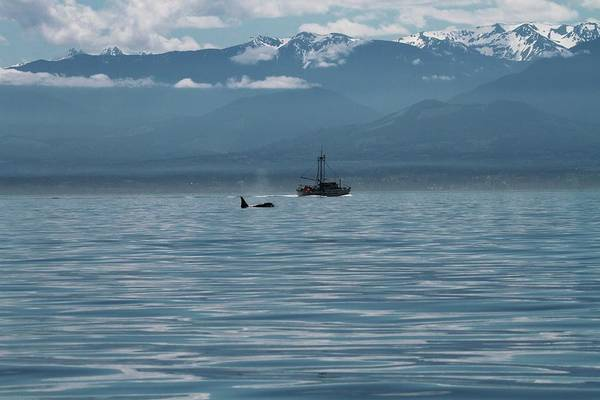 Save The Whales Photograph - Whale Watching In The Strait Of Juan De Fuca by Dan Sproul