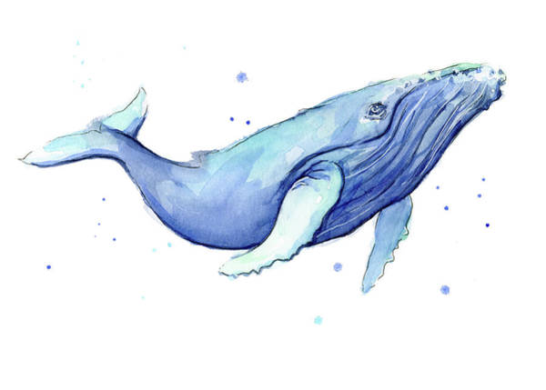 Whimsical Wall Art - Painting - Whale Watercolor Humpback by Olga Shvartsur