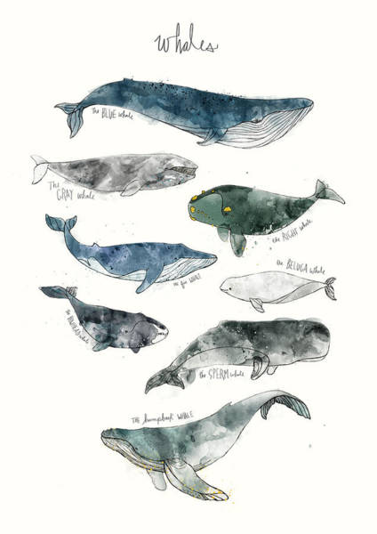 Gray Wall Art - Painting - Whales by Amy Hamilton