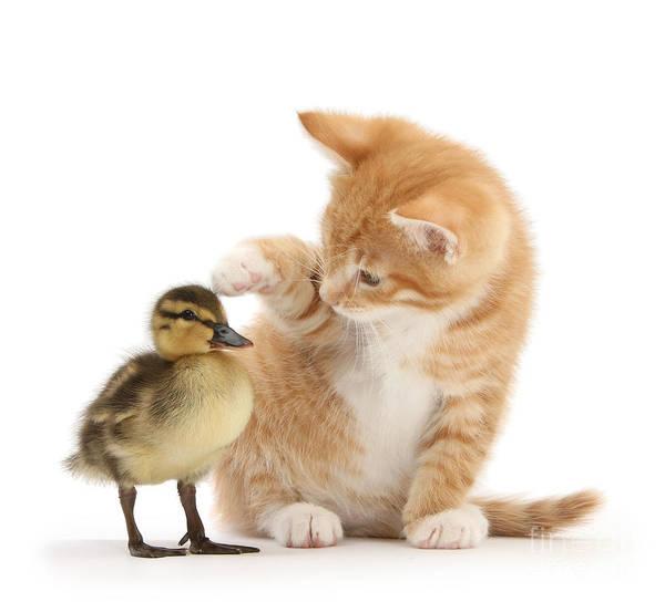 Photograph - What A Cute Little Ducky by Warren Photographic