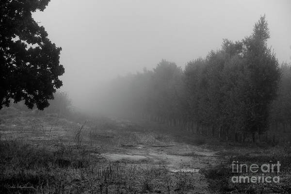 Photograph - What A Foggy Morning 04 by Arik Baltinester
