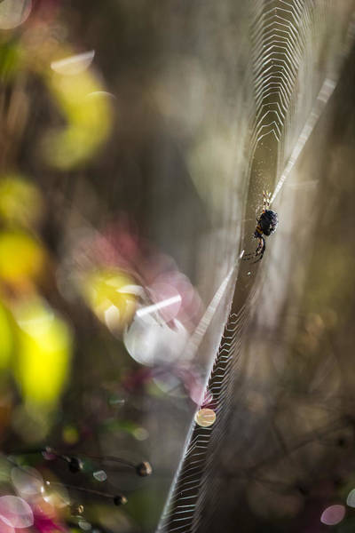 Photograph - What A Spider May See by Robert Potts