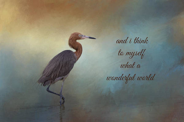 Egrets Wall Art - Photograph - What A Wonderful World by Kim Hojnacki
