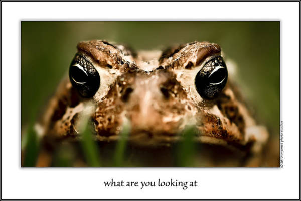 Photograph - What Are You Looking At by  Onyonet  Photo Studios