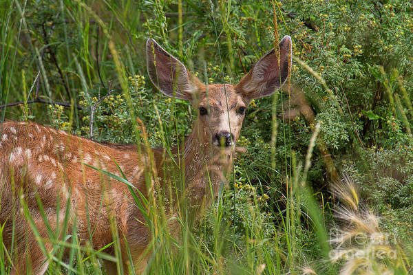 Photograph - What Big Ears by Jim Garrison
