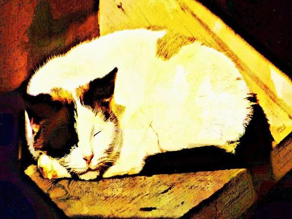 Digital Art - What Do Cats Dream Of by Robert Grubbs