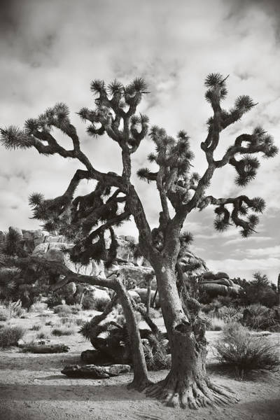Deserts Photograph - What I Wouldn't Give Bw by Laurie Search