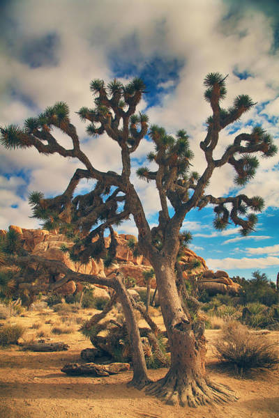Joshua Tree National Park Wall Art - Photograph - What I Wouldn't Give by Laurie Search
