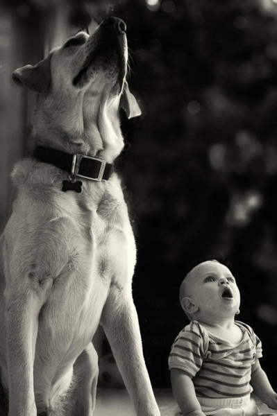 Labrador Retriever Photograph - What Is That by Stelios Kleanthous