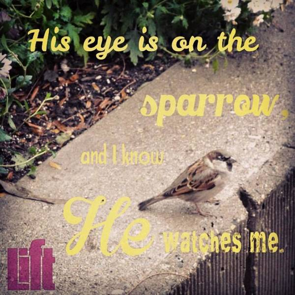Design Wall Art - Photograph - What Is The Price Of Two Sparrows-one by LIFT Women's Ministry designs --by Julie Hurttgam