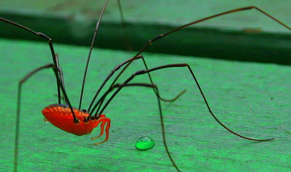 Daddy Long Legs Photograph - What  by Julie Lueders