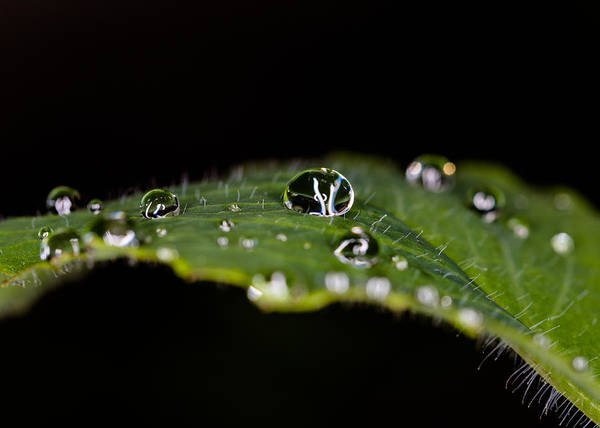 Gota Photograph - What The Rain Left On The Leaf by Emilio Portuondo