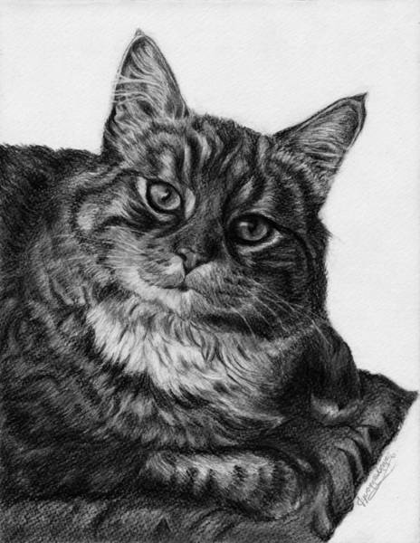 Tabby Drawing - What's For Dinner by Jyvonne Inman