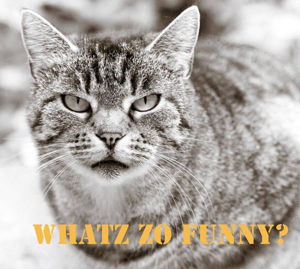 Wall Art - Photograph - Whatz Zo Funny by Frank Tschakert