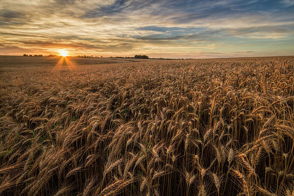 Photograph - Wheat At Sunset by Scott Bean