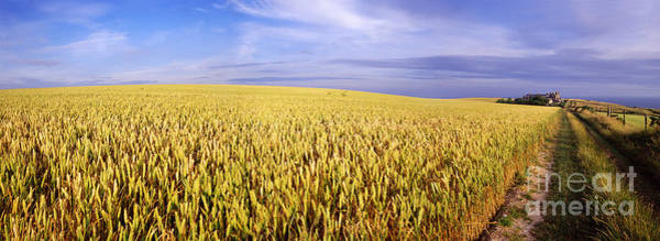 Photograph - Wheat Field Panorama by Warren Photographic