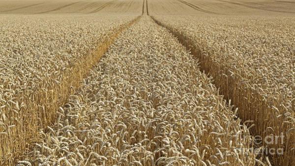 Wall Art - Photograph - Wheat Field by Richard Thomas