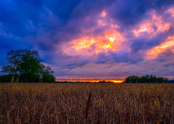 Photograph - Wheat Field Sunset by Brad Boland