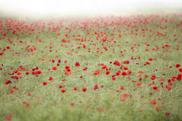 Wild Poppies Digital Art - Wheat Field With Poppies 2 by Matjaz Preseren