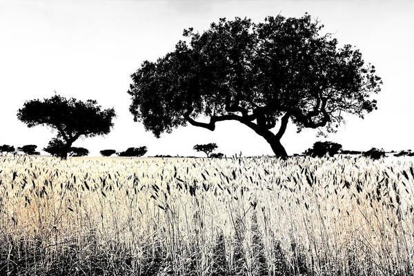 Photograph - Wheat Fields by Edgar Laureano