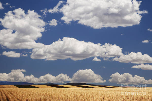 Photograph - Wheat Fields In Western Colorado by Dennis Flaherty