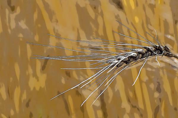 Photograph - Wheat Grain 2 by Ginger Wakem