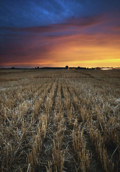 Wall Art - Photograph - Wheat Rows After Sunset by Cale Best