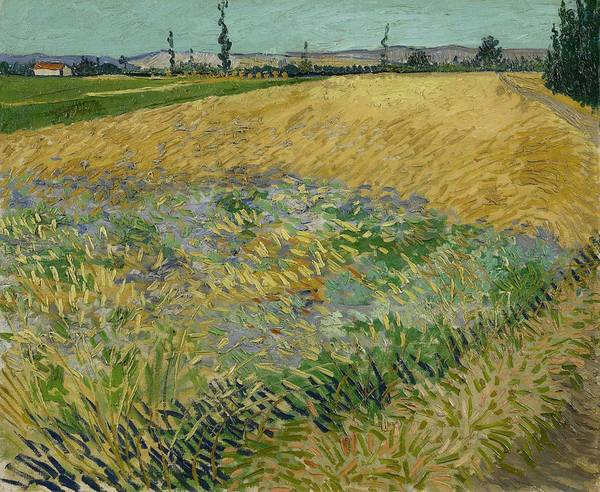 Painting - Wheatfield Arles, June 1888 Vincent Van Gogh 1853 - 1890 by Artistic Panda