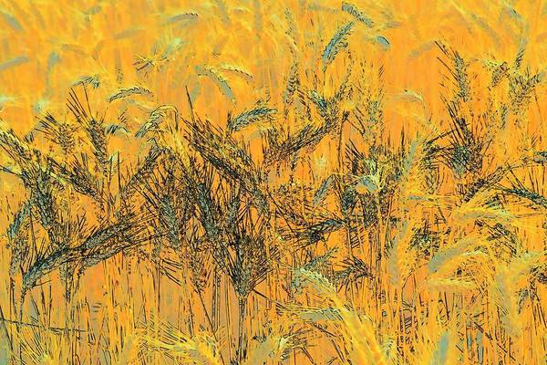 Photograph - Wheatscape 6343 by Jerry Sodorff
