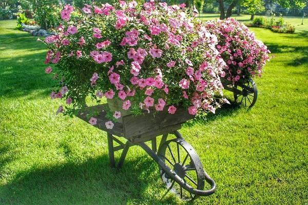 2004 - Wheel Barrow Full Of Flowers Art Print