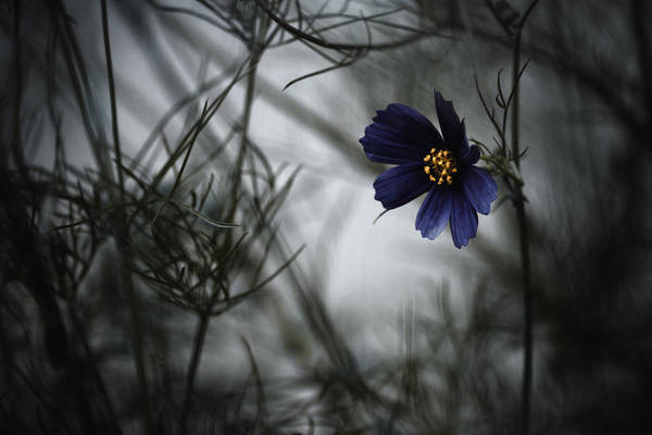 Bokeh Wall Art - Photograph - When Cosmos Will Be Blue by Fabien Bravin