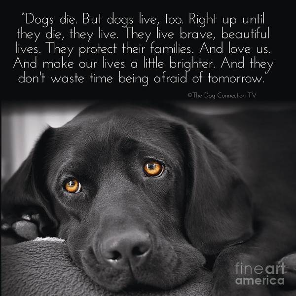 Digital Art - When Dogs Die by Kathy Tarochione