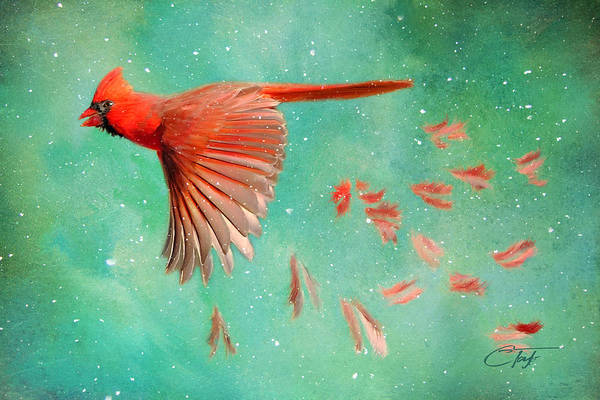 Cardinal Mixed Media - When Feathers Fly by Colleen Taylor