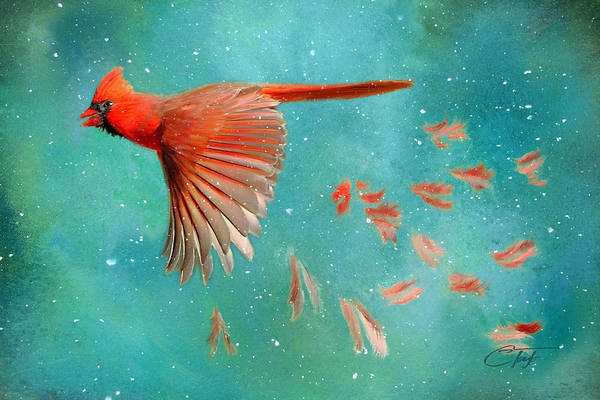 Cardinal Mixed Media - When Feathers Fly II by Colleen Taylor