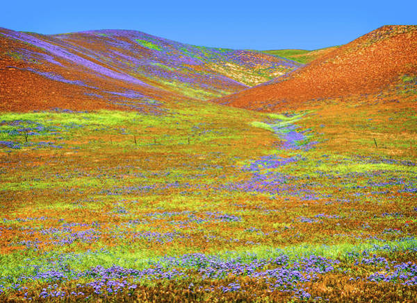 Interstate 5 Wall Art - Photograph - When Flowers Carpet The Earth by Lynn Bauer