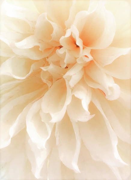 Wall Art - Photograph - When Nature Becomes Divine by Karen Wiles