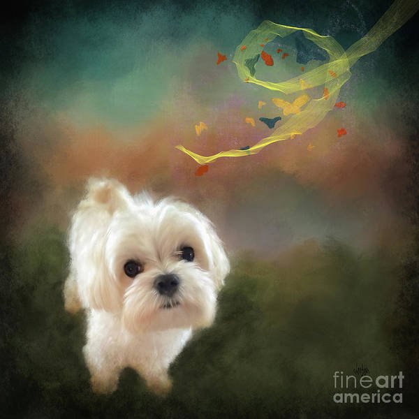 Wall Art - Digital Art - When Puppies Get Confused by Lois Bryan