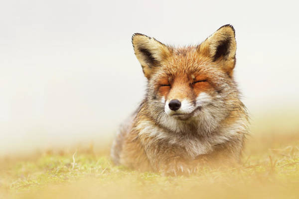 Happiness Photograph - When The Lady Smiles - Red Fox by Roeselien Raimond