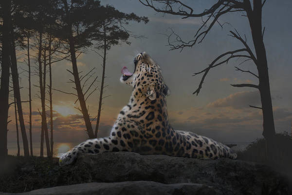 Panthera Pardus Photograph - When The Night Comes by Joachim G Pinkawa