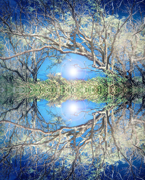 Photograph - When Trees Embrace by Tara Turner