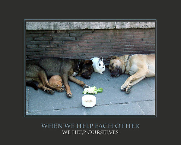 Improvement Photograph - When We Help Each Other by Donna Corless