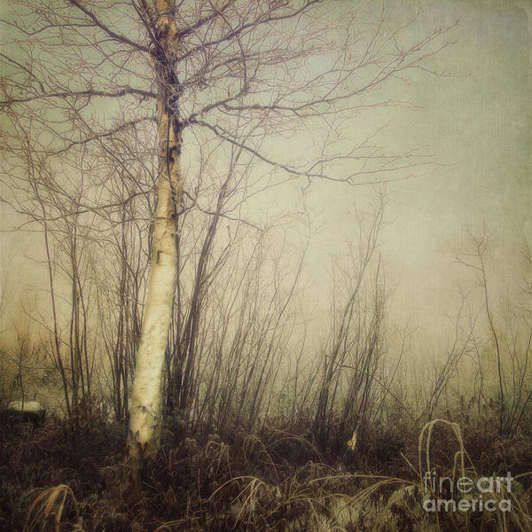Earth Tones Photograph - When You Find The One by Priska Wettstein