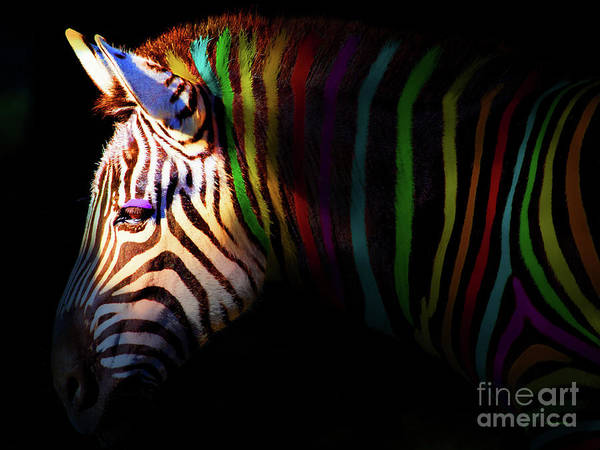 Photograph - When Zebras Dream 7d8908 by Wingsdomain Art and Photography