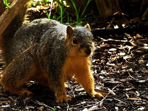 Photograph - Where Are My Nuts by Scott Hovind