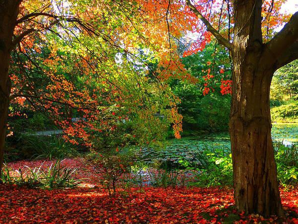 Where Autumn Lingers  Art Print