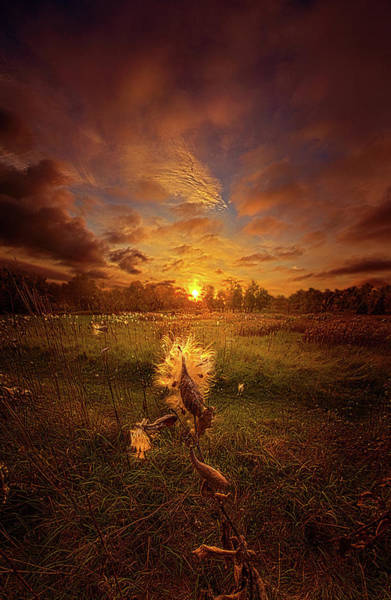 Photograph - Where Ever Life Takes Us by Phil Koch